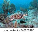 A Hawksbill sea turtle swims along Molasses Reef in Key Largo, Florida.