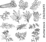 vector collection of herbs and... | Shutterstock .eps vector #246346693