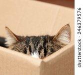 Stock photo cute cat sitting in cardboard box 246379576