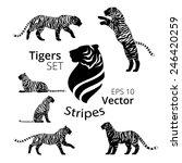 tiger stripes set vector  eps... | Shutterstock .eps vector #246420259