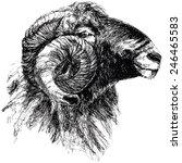 vector illustration of engraved ... | Shutterstock .eps vector #246465583