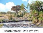 Group Of Hippos  Hippopotamus...