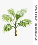 watercolor pot plant palm...   Shutterstock . vector #246517603