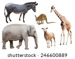 a zebra  elephant  sheep ...   Shutterstock . vector #246600889