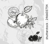 hand drawn decorative apple... | Shutterstock . vector #246603754