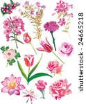 illustration with pink flowers... | Shutterstock .eps vector #24665218