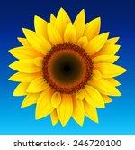 Sunflower Background  Yellow...