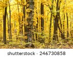 Saturated Yellow Foliage In...