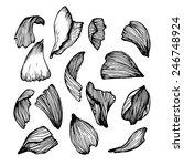 hand drawn vector illustration  ...   Shutterstock .eps vector #246748924