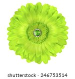 Green Silk Germini Daisy Flowe...
