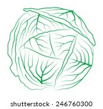 cabbage on white background | Shutterstock .eps vector #246760300