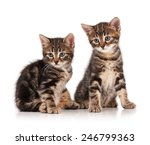 Stock photo two serious cute kittens isolated on white background cutout 246799363