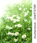 green grass and chamomile... | Shutterstock . vector #246973789