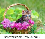 Stock photo cute little kitten in a basket with pink flowers outdoors 247002010