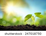 young sprout in springtime... | Shutterstock . vector #247018750