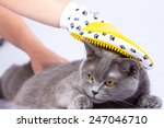 Stock photo doctor examines a cat on a white table against a white background 247046710