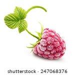 Frozen Raspberry Branch...