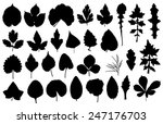 set of different leaves... | Shutterstock .eps vector #247176703