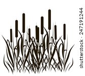 Bulrush. Black Silhouette On A...