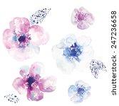 watercolor anemone flower...   Shutterstock .eps vector #247236658