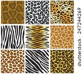 animal skin seamless pattern... | Shutterstock .eps vector #247244269