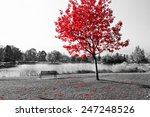 Empty park bench under red tree ...