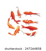 Red And Gold Koi Fishes Vector...