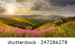 composite landscape with high wild grass and purple flowers on the top of high mountain in sunset light - stock photo