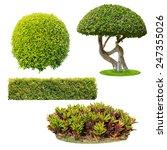 bush on white background  ... | Shutterstock . vector #247355026
