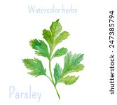 parsley. watercolor herbs and... | Shutterstock .eps vector #247385794