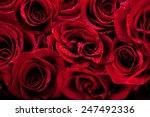 Stock photo beautiful dark red roses 247492336