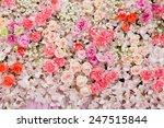 beautiful flowers background... | Shutterstock . vector #247515844