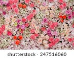 beautiful flowers background... | Shutterstock . vector #247516060
