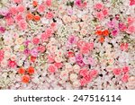 beautiful flowers background... | Shutterstock . vector #247516114