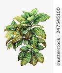 Watercolor Pot Plant  Croton...
