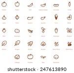 vector vegetables icon set   Shutterstock .eps vector #247613890
