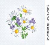 bouquet camomile.  summer... | Shutterstock .eps vector #247629043
