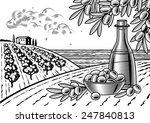 olive harvest landscape black... | Shutterstock . vector #247840813