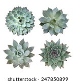 Macro Of Succulent Plant In Th...