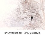Bald Eagle Sits In A Tree In...