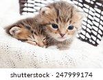 Stock photo cute kittens in a wicker basket on a white blanket 247999174