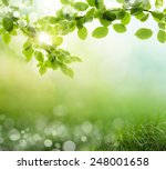 natural green background with... | Shutterstock . vector #248001658