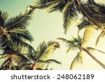 Coconut Palm Trees Over Bright...