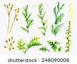 watercolor variety  of wild... | Shutterstock . vector #248090008