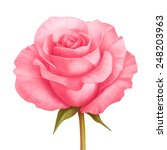 rose pink flower decorative... | Shutterstock . vector #248203963