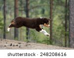 Stock photo puppy jumping 248208616