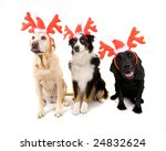 christmas dogs - stock photo