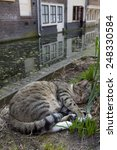 Small photo of Alley cat sleeping near the canal