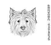 Sketch West Highland White...