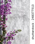 bougainvillea on wall as texture | Shutterstock . vector #248377513